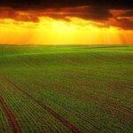 Innovazione e sostenibilità le nuove sfide per le Pmi agroalimentari italiane