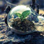 Economia circolare e startup, ecco 11 idee per un ambiente più sostenibile