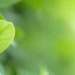 """Alla ricerca del """"Sense of purpose"""": per un impatto sostenibile ed esponenziale"""