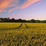 Cibo e sostenibilità: quale diritto per le generazioni future?