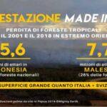 In Italia più olio di palma nei motori che nei biscotti